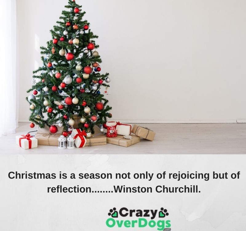 Christmas is a season not only of rejoicing but of reflection........Winston Churchill.