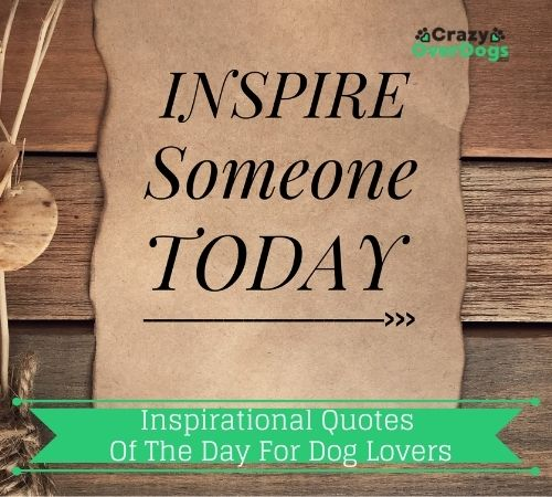 inspirational quotes of the day for dog lovers