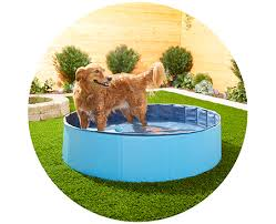 outdoor dog products