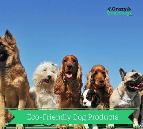 eco friendly dog products