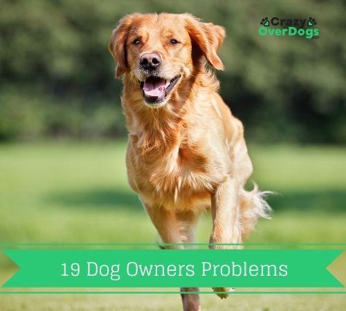 19 dog owner problems
