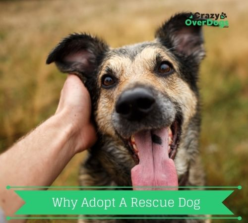 why adopt a rescue dog