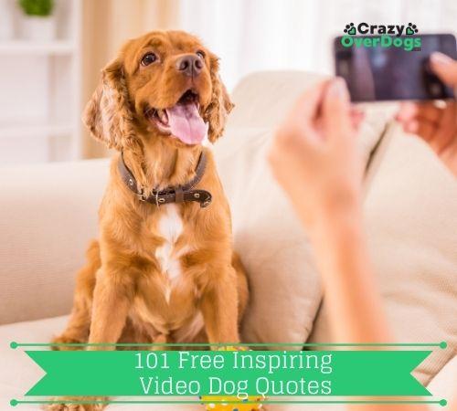 101 Free Inspiring Dog Quotes