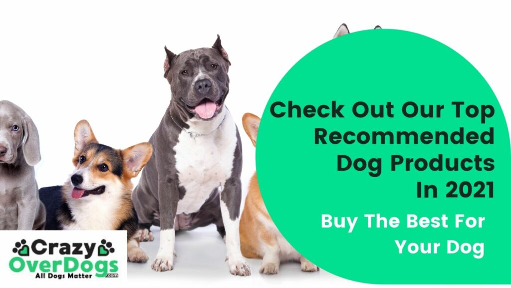 top recommended dog products
