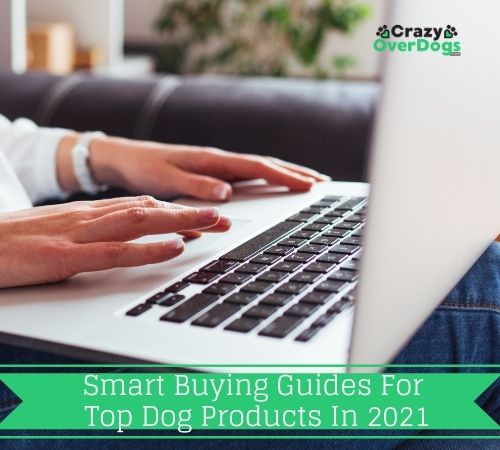 Smart Buying Guides For Top Dog Products in 2021