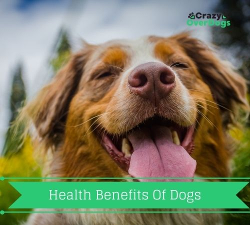 Discover The Top 7 Health Benefits of Dogs