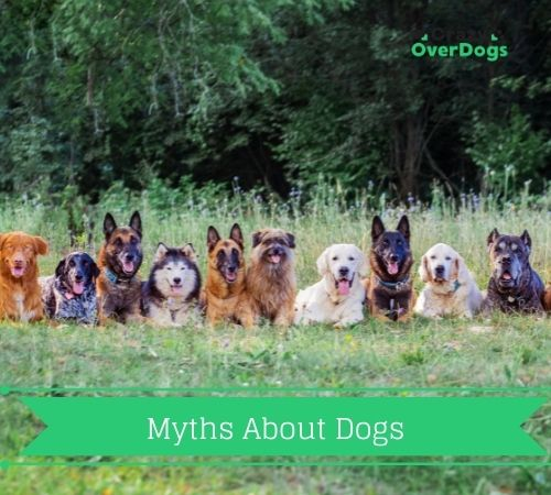 Are These Myths About Dogs True or Not