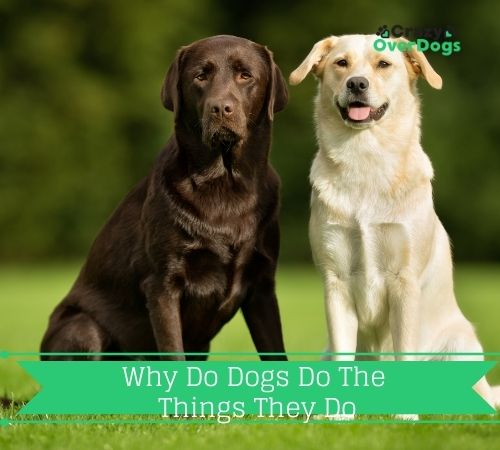 Why Do Dogs Do The Things They Do