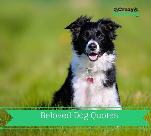 beloved dog quotes