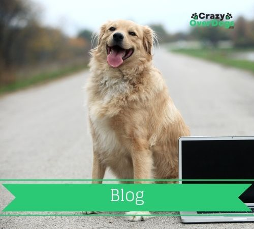 crazy over dogs - blog