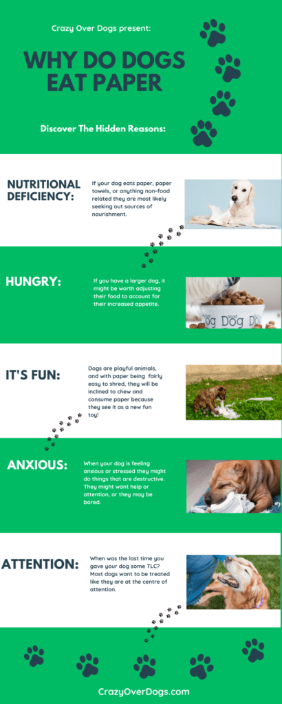 why do dogs eat paper infographic