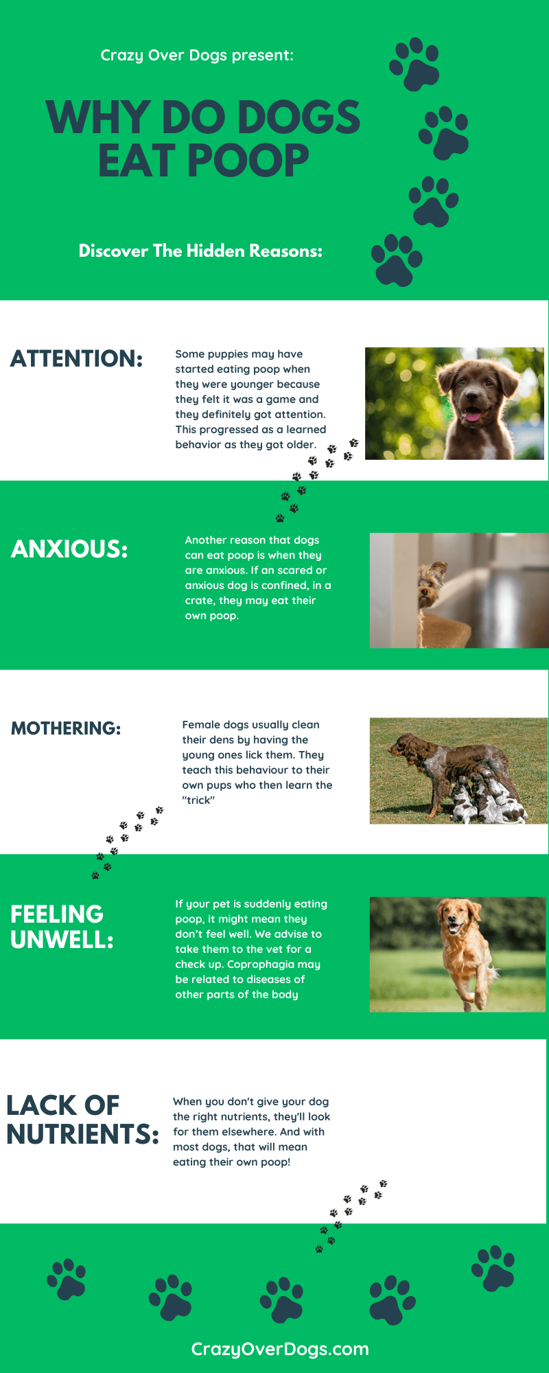 why do dogs eat poo infographic