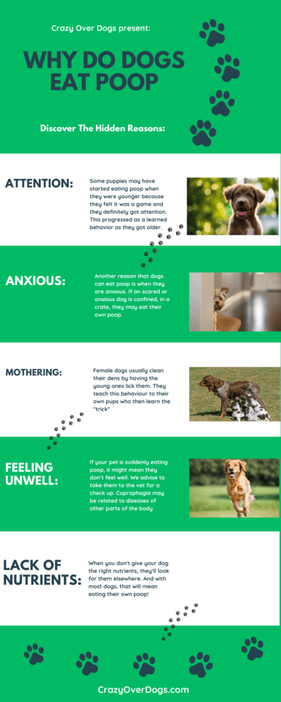 Why Do Dogs Eat Poop Infographic:
